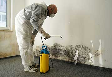 Mold Removal | Hollywood CA