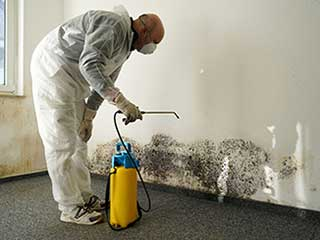 Efficient Mold Removal | Hollywood Carpet Cleaning