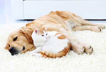 Pet Hair Removal | Hollywood Carpet Cleaning