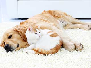 Pet Hair Removal | Hollywood LA